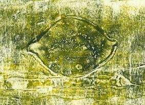 Irmgard Hofmann: Wie kommt die Zitrone auf den Mond?